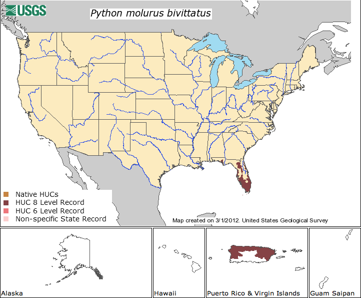 Information The Everglades Invasion of the Burmese Python